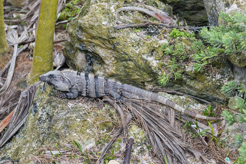 Tierwelt von Yucatán